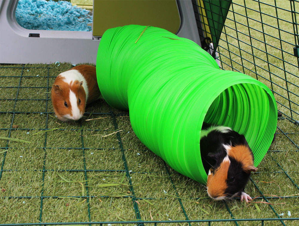 Uitrekbare tunnel voor konijnen en cavia s konijnen speelgoed konijnenbenodigdheden omlet - Juguetes caseros para conejos ...