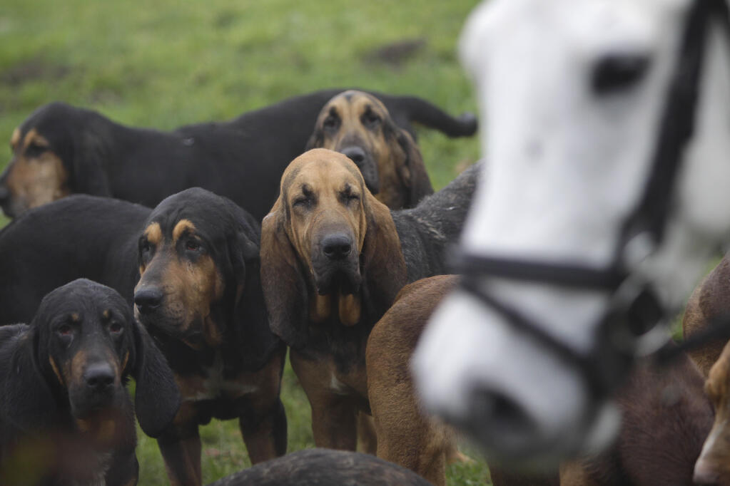 A Bloodhound To Die For Bloedhond | Hon...