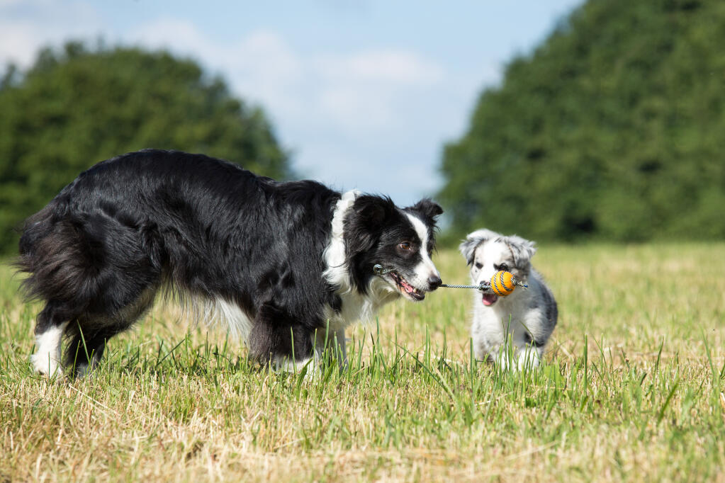 how to teach a puppy mill dog to play