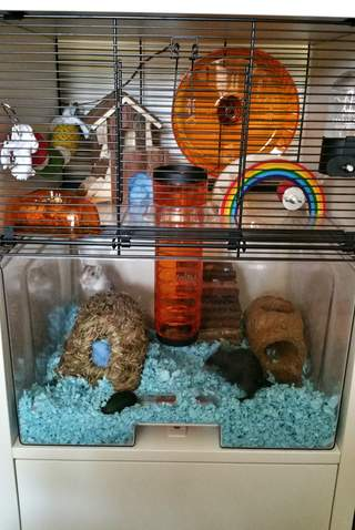 Mater and Mcqueen loving the new qute cage with storage