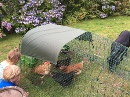 Clean up operation and chicken enrichment