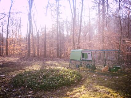 Eglue Cube with 3M extension - holds our 4 hens and is easy to move around the yard and the nearby woods.
