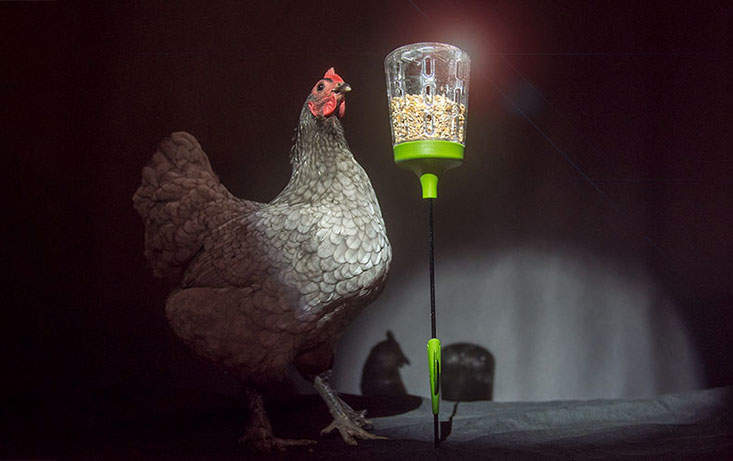 Your chickens will be so proud of their Elvis Peck Toy they burst into song!