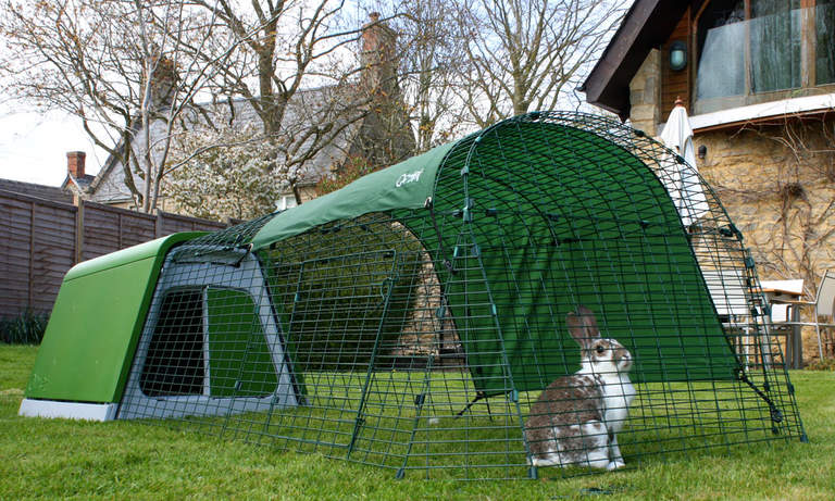 A rabbit sitting in the run of the Eglu Go Rabbit Hutch