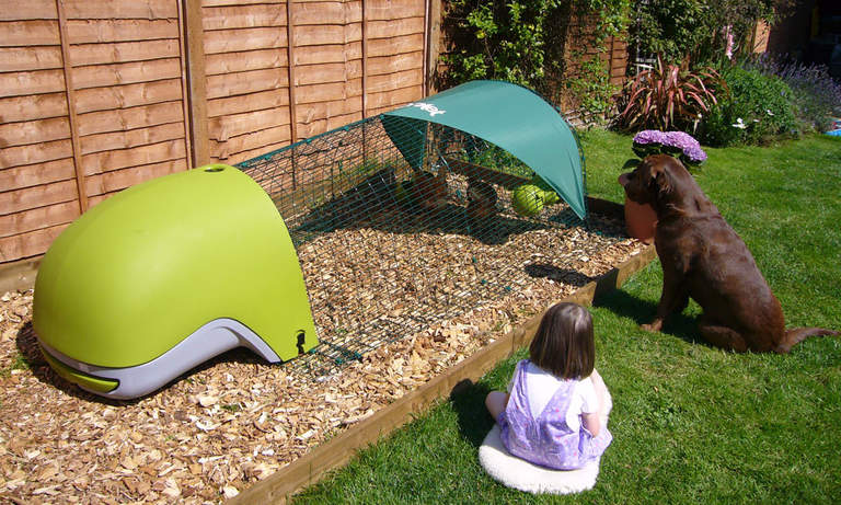 A green Eglu Classic with Run on bark chippings - children and pets will enjoy their new company