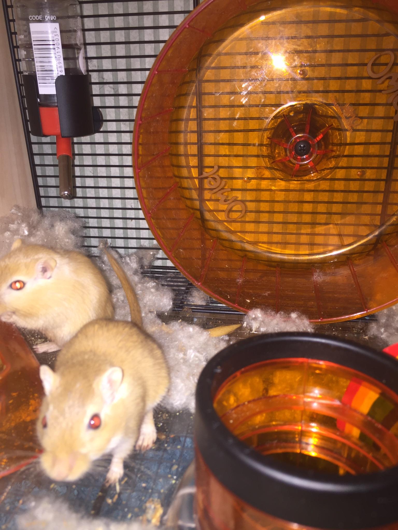 Qute kooi voor hamsters en gerbils