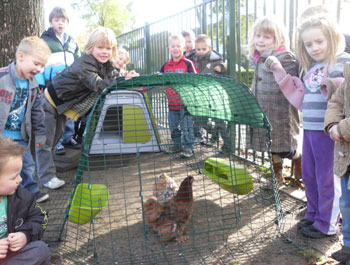 Image of schoolchildren looking at a chicken